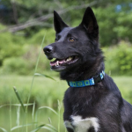 Lupine Adjustable Dog Collar | Buy it for life (BIFL)