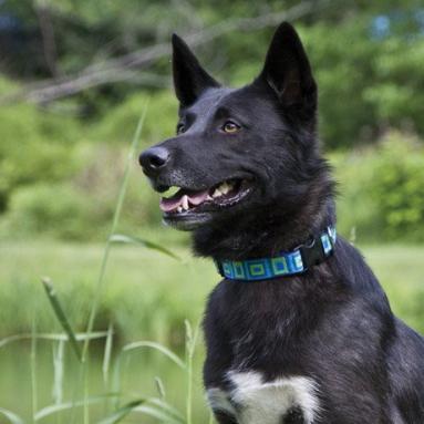 Lupine Adjustable Dog Collar